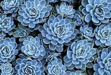 Spectacular Succulents / For the love of... Succulents
