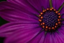 Purple Colors / by Sherry Lilly