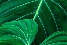 Gorgeous Greens / Glorious Shades of Green