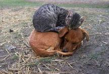 i love animals / by Deidra