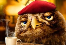 All Things Owl / A collection of pictures of owls and things made to look like owls / by Jan Gold