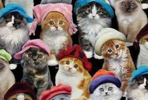 Cats in Hats / by Jan Gold