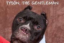 SE States ~ Pets in Rescue - No Kill Shelters Needing Adoption & Fab Fur-Ever Homes / FL, GA, TN, AL, Louisiana, Miss, N & S Carolina, the Virginias, & Kentucky / by uber wagmore