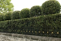 Hedge ideas / Don't settle for a boring old straight, green hedge. You can create wave forms, archways, windows, topknots, scallops, 'seats', loaf tops & balls. Set off deciduous & colourful leaf hedges against a green background of foreground