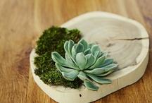 succulents  / succu-love / by Jaime Lynn