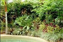 Tropical gardens in temperate climates / Even if you don't live in the tropics, there are ways to give your garden a tropical feel. Create a dappled-light canopy, exclude cold air with thick planting, disguise your boundaries, make plant pictures with textured & colourful foliage, add exquisite garden details & take a few planting risks. Tropical Breeze has hot, dry summers and many frosty nights & yet - you're in the tropics!