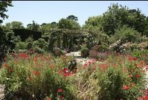 Red Cow Farm garden / Red Cow Farm has 20 garden rooms spread over 6 acres. Its makers have a special knack for making plant pictures, both macro sized with mature conifers and shrubs but also at intimate scale