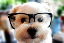 Animals Wearing Glasses / by Jan Gold