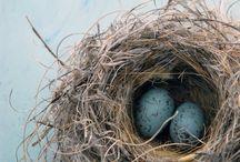 Birds Nest / by Jan Gold