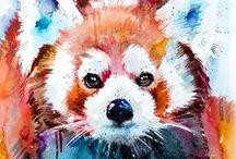 vörös panda :)