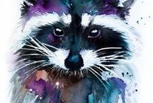 mosómedve - raccoon