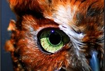 Owls / by Debra Bostwick Oliver