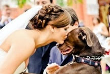 Pet at the wedding!