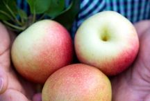 Pick your own in Maine's Kennebec Valley