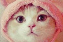 ~ ℂᎯ Ƭ (>'.'<)ℂouture ❤ / Dressed up cool cats about town  ღ.¸¸.✿`❤❤`✿.¸¸.ღஐღ.¸¸.✿`❤❤`✿.¸¸.ღღ.¸¸.✿`❤❤`✿.¸¸.ღஐღ.¸¸.✿`❤❤`✿.¸¸.ღღ.¸¸.✿`❤❤`✿.¸¸.ღஐღ.¸¸.✿`❤❤`✿.¸¸.ღ  / by ❤ Ɗiαηηe ❤ ///✿☀ᴗ☀❤\\\