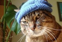 Crochet/Knitting / by Nancy de Rojas