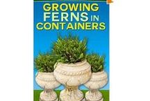 Ferns for Container Gardens / Best Ferns for Use in Containers