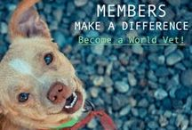Easy ways for YOU to help! / Here are some little steps that make a big difference!  World Vets International Aid for Animals provides aid to animals around the globe and you can help!