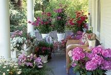 gardening / by glamorous diva