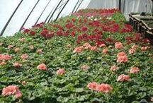 Bring On The Sun! (Sun Annuals) / Annuals that grow in the bright sun shine.