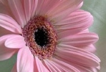 PINK makes my ♥ happy! / by Judi Pearson