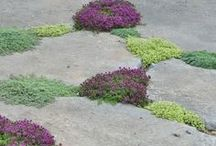 Beauty Tips / Beautification and landscaping ideas for your yard.