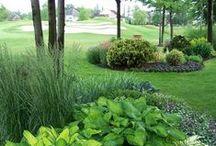 Garden Ideas / Going green...