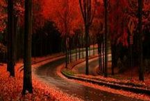 """Autumn Inspiration / """"Autumn is a second spring when every leaf is a flower."""" ~ Albert Camus"""