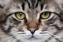 Cats &