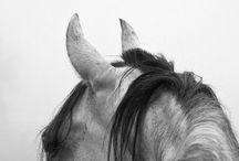 horse. / by Ashley Kelemen Photography