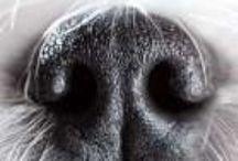 Dogs: Random Info / (Hopefully) timely, relevant internet info. / by Margie Hillenbrand