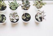 plants | flowers / by Janee Lookerse