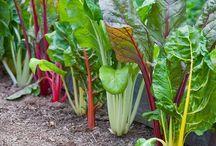 Permaculture in my garden / by Marjolijn Kerkhof