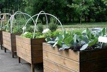 Container Garden / by Kristie Vetter