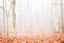 seasons / by Janee Lookerse