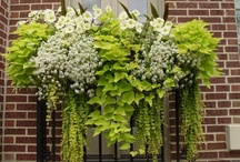 window boxes and containers