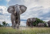 Animals / by Kat MacArthur