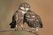 Owl Always Love You / by Holly Midd