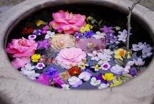~Fleurs 2~ / by Patricia Margaret