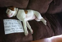 Shame on You! / Pet shaming photos.  / by Holly Midd