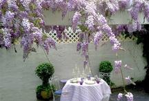 wisteria love......
