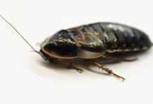 Fish & cockroach etc 9/4/2013