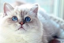 I love cats / Cats, kittens and kitties of all types.