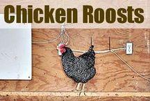 Farm Living | Raising Chickens / How to raise chickens on the Farm