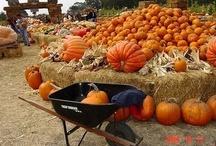 "school days - ""p"" is for pumpkin / by Emily Ligon"