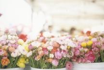 Blömkes {Flowers, Balcony, Garden}