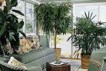 Home Interiors~House Plants / Things to know about house plants