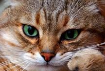 """Animals That Make Me Go """"AAAAAAAAWWWWWW!"""" / by Michaela Bishop"""