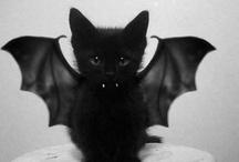 Gatetes & Cats