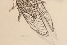 Cicada / Sources for a multidisciplinary body of phenomenological artwork: on dreams, surviving trauma, and the life cycle of the cicada.